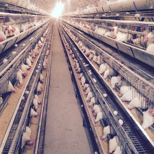 چه کسی از افزایش قیمت تخم مرغ سود میبرد!