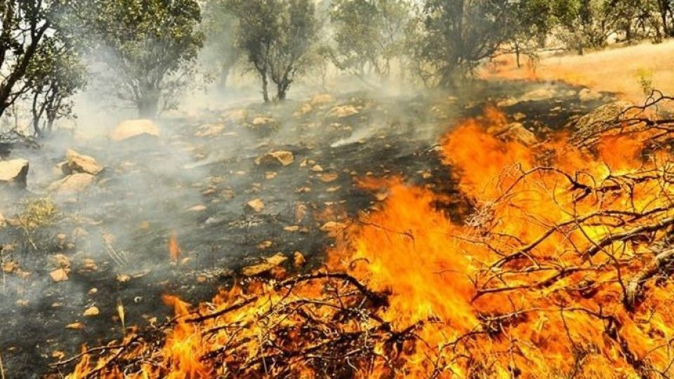 Zagros burned in the fire! + photo