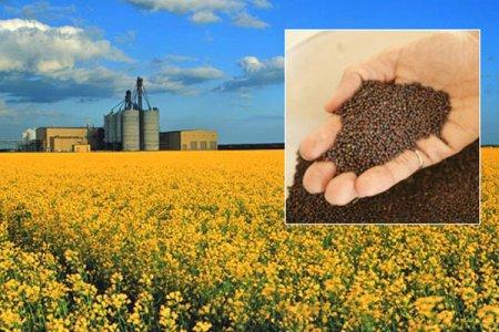 علیرضا مهاجر مجری طرح دانههای روغنی وزارت جهاد کشاورزی مطرح کرد: