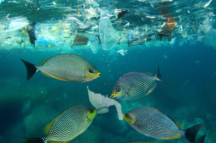 iranian agricultural news agency: in fishmeal: A growing concern Microplastics in fishmeal: A growing concern