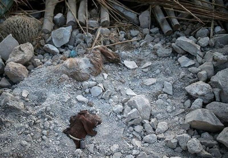 540 billion USD Estimated earthquake damage to Kermanshah agriculture